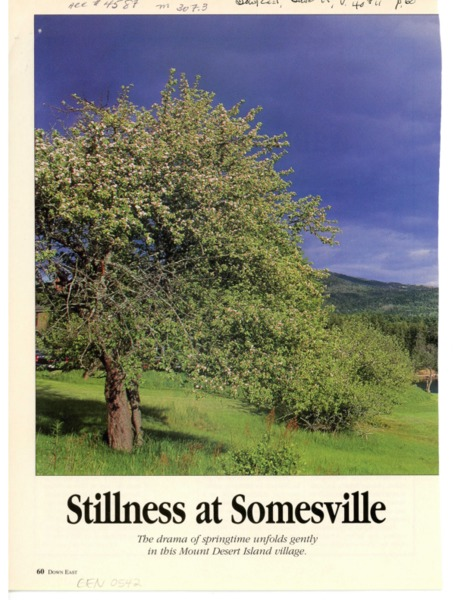 Stillness at Somesville
