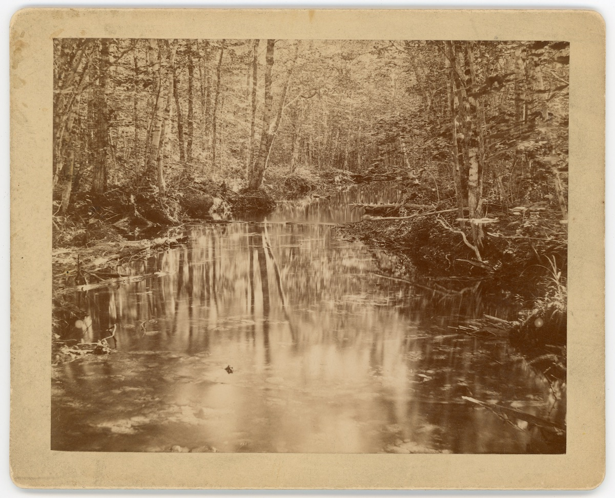 Harbor Brook