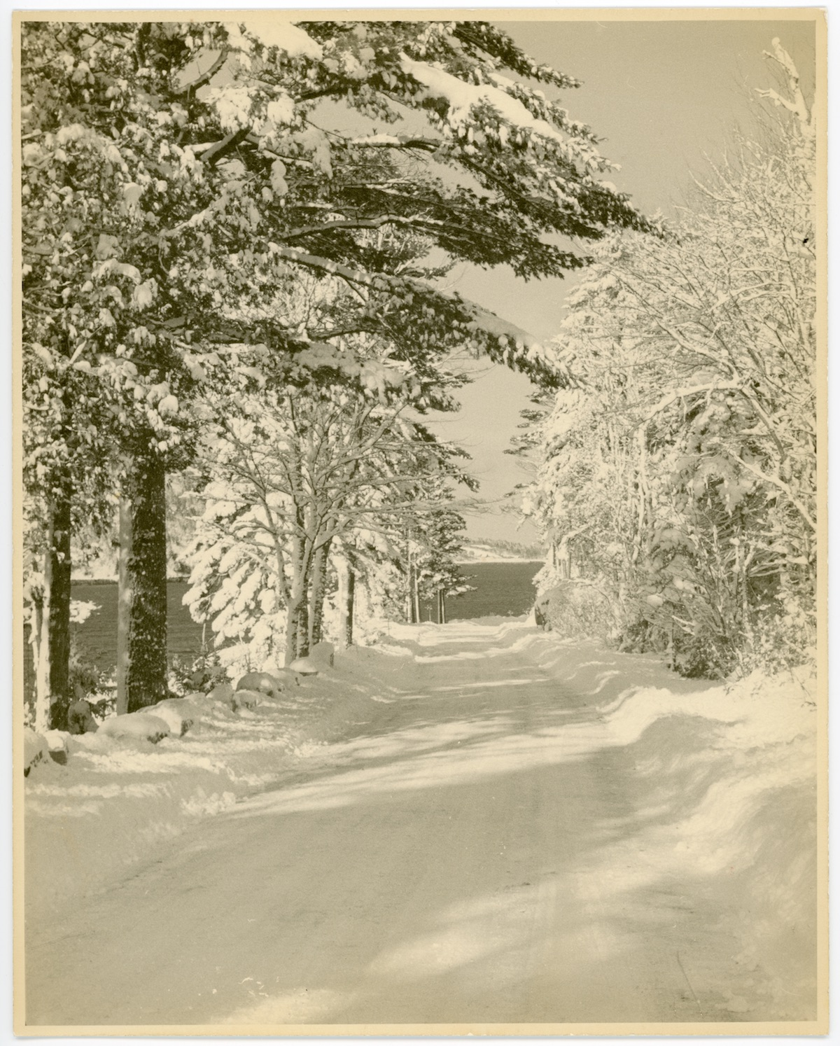 Sargeant Drive in the winter