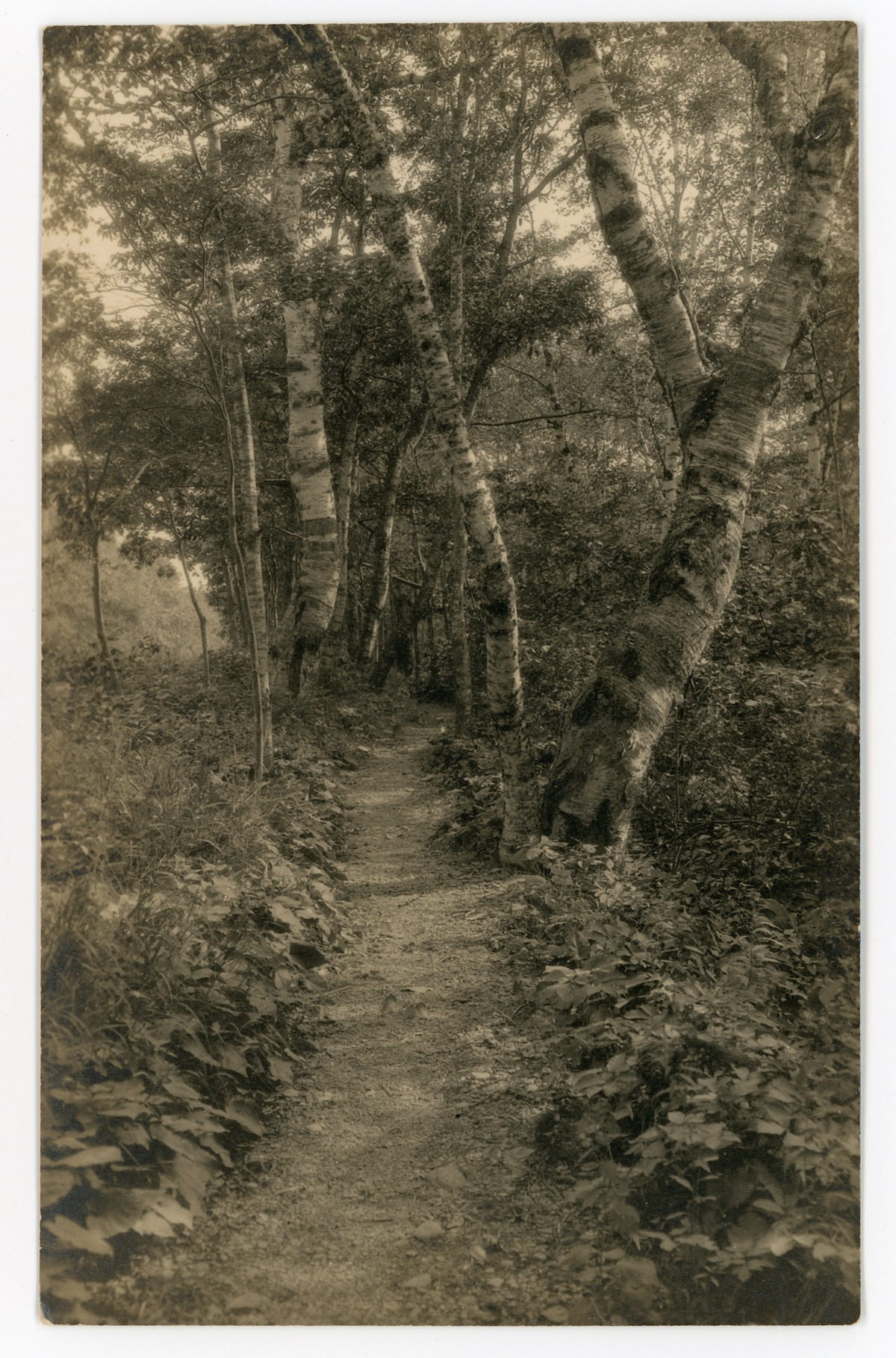 Path to Schooner Head, Mount Desert, ME