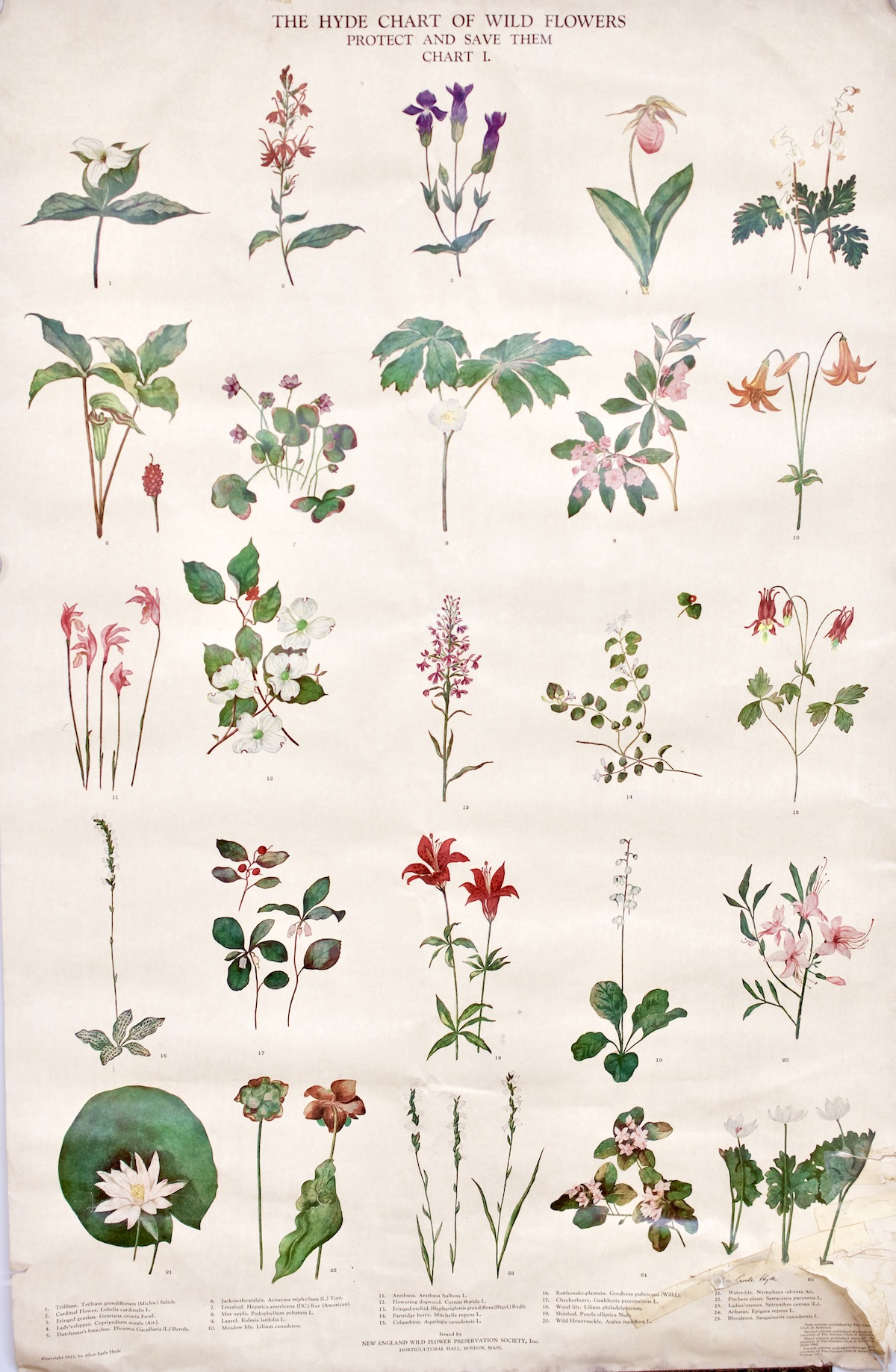 Hyde Chart of Wild Flowers